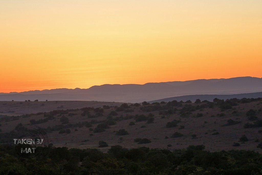 Schotia sunset 2