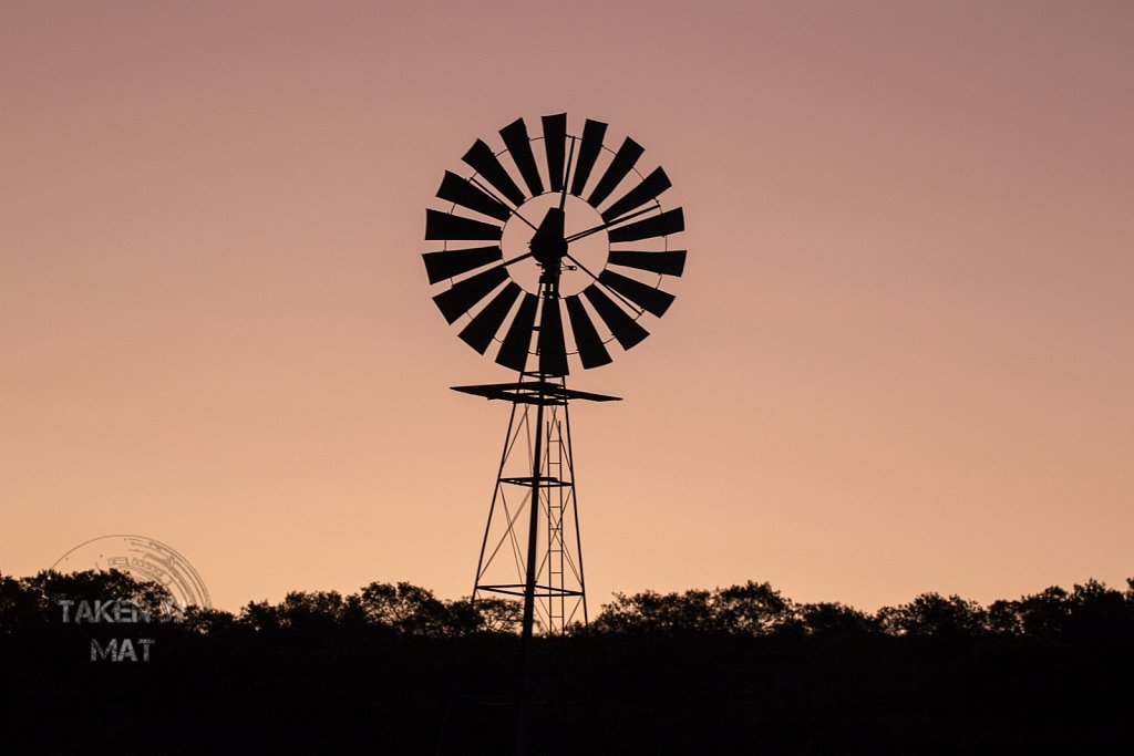 Schotia sunset 1