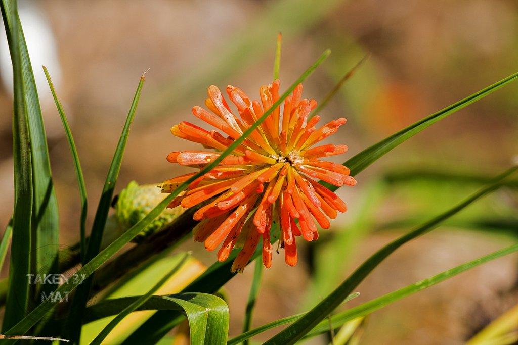 Winter in Kirstenbosch 5
