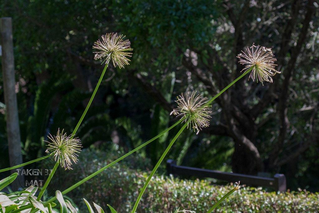 Winter in Kirstenbosch 7